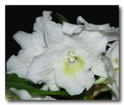 Орхидеи на любой вкус и кошелек.